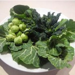young broccoli sprouts a superfood